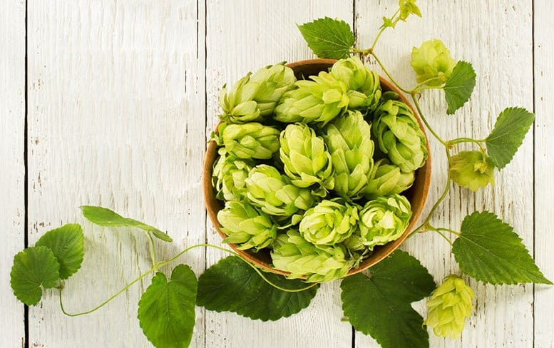Loral Hops 1