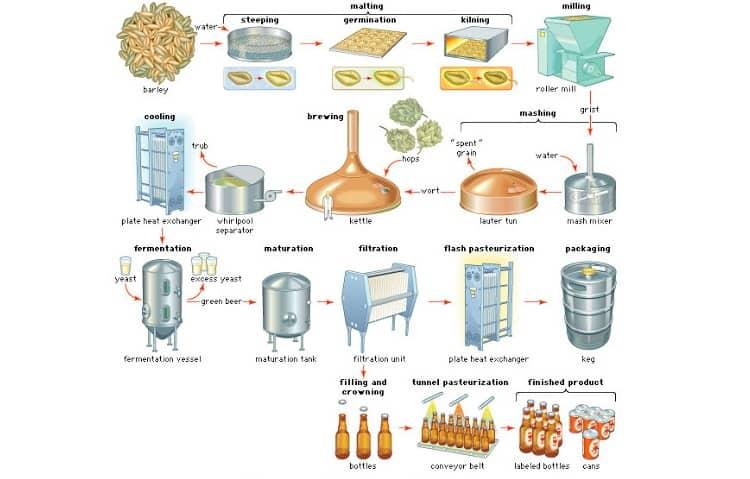 Malt Brewing Process